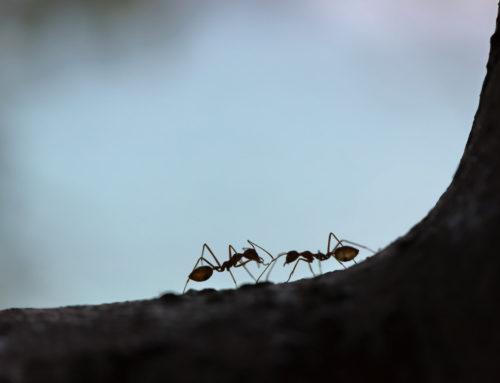 Ameisen auf dem Balkon – Was kann ich dagegen tun?