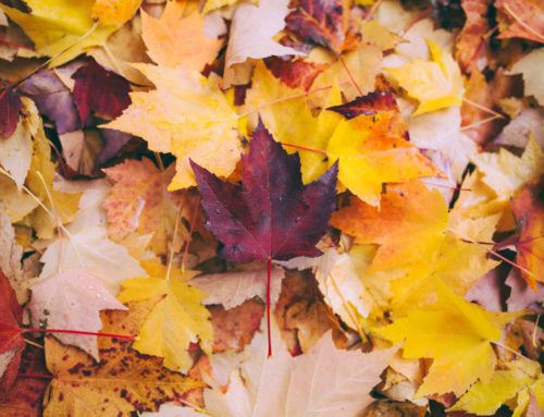 Was kann ich mit Herbstlaub machen?